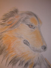 Portrait of your dog in pastel